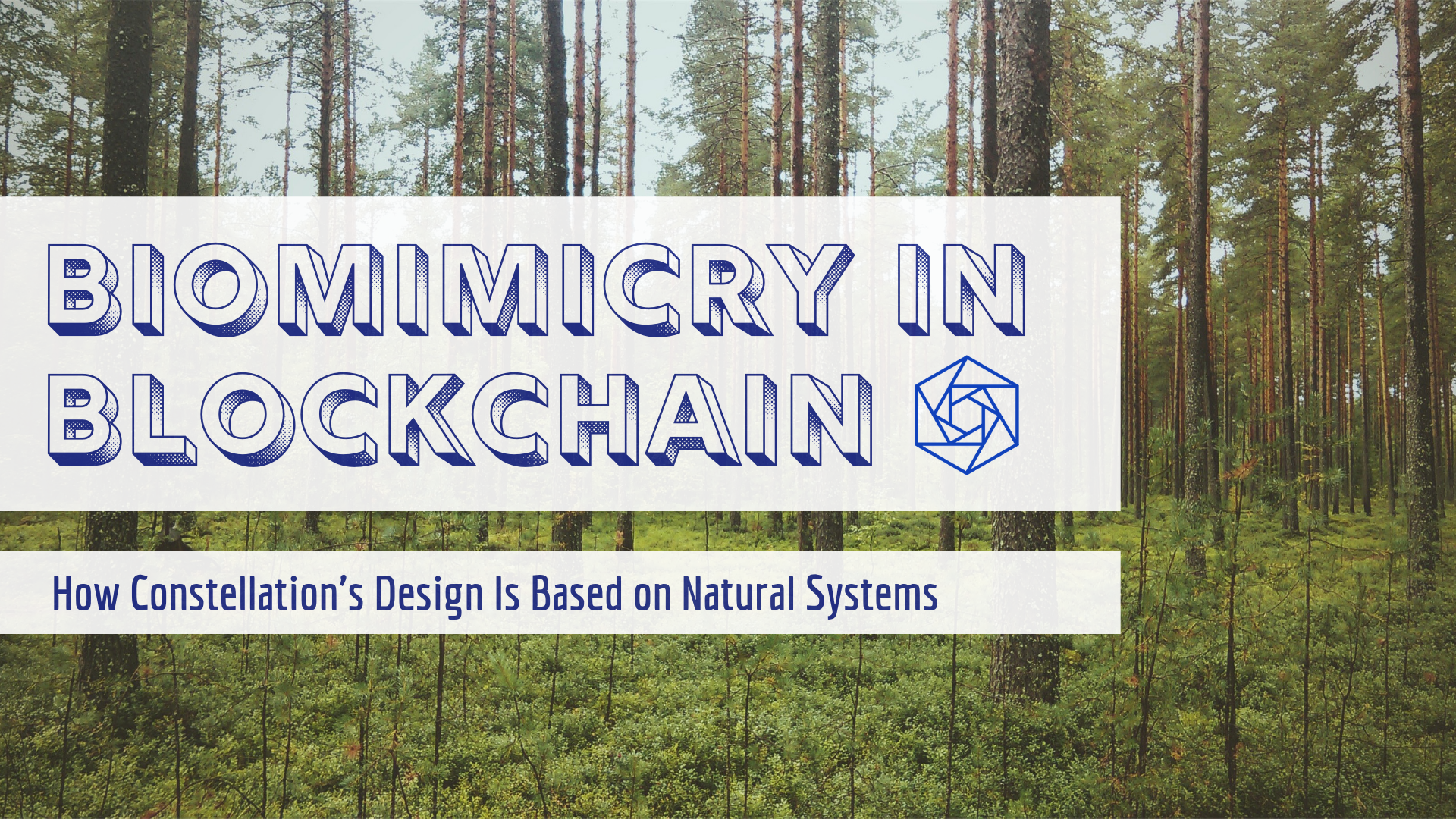 Biomimicry in Blockchain: How Constellation's Design Is Based On Natural Systems